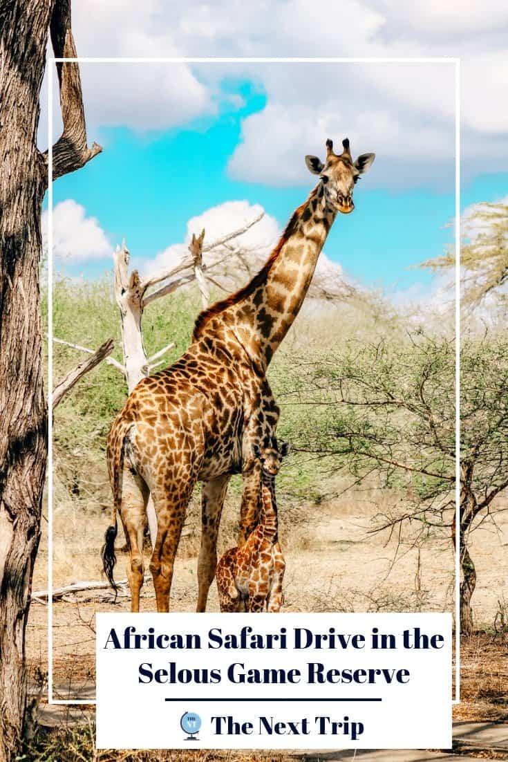 African Safari Drive in the Selous Game Reserve