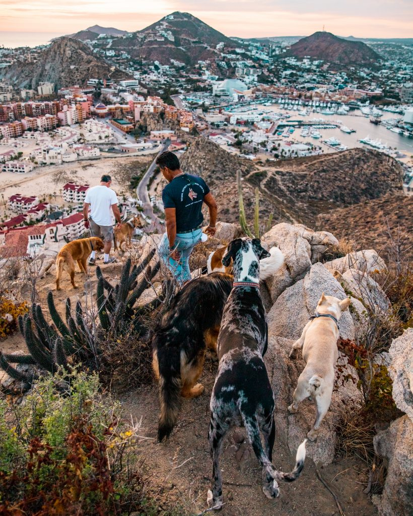 Hiking to Mount Solmar Cabo San Lucas with Dogs