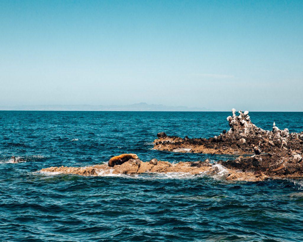 Sea Lion Island near La Paz