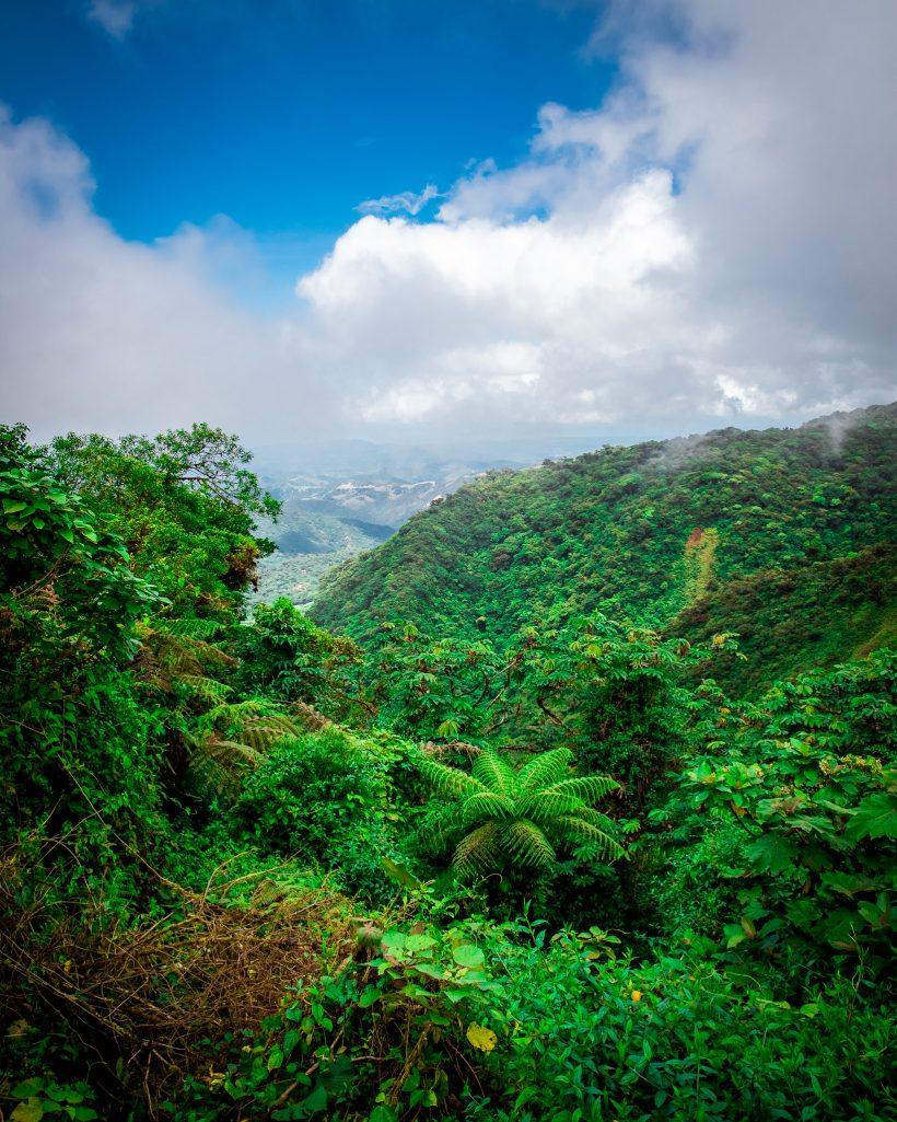 Manuel Antonio Rainforest Costa Rica